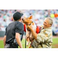 St. Paul Saints ball pig gives the ump a kiss